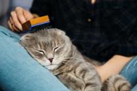 Правила ухода за домашними кошками
