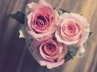 За подарками – в «Дом цветов»